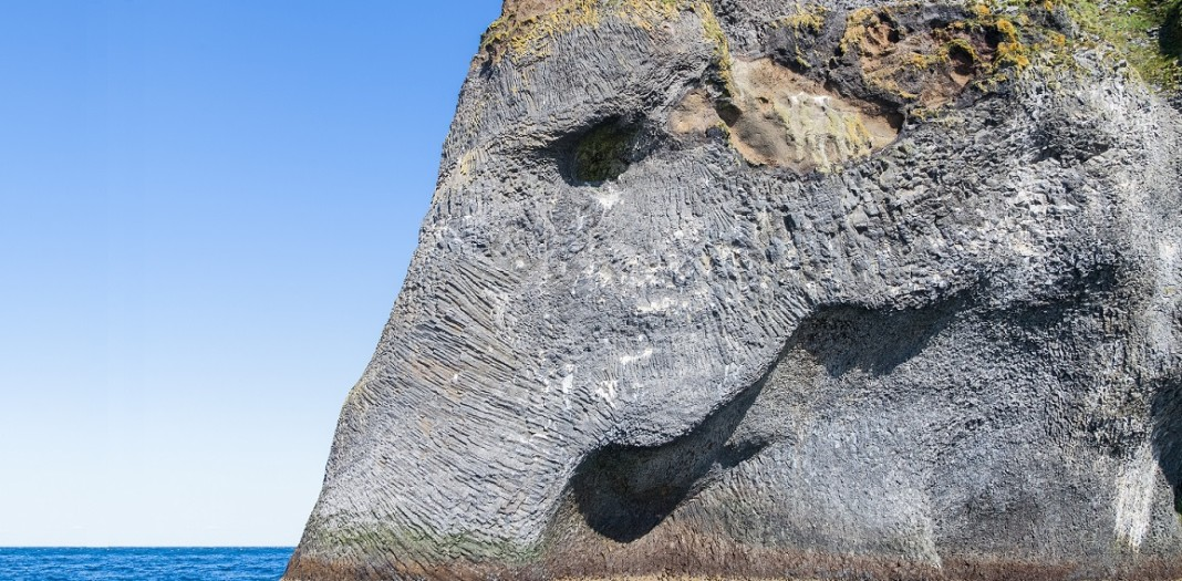 İzlanda deniz fili