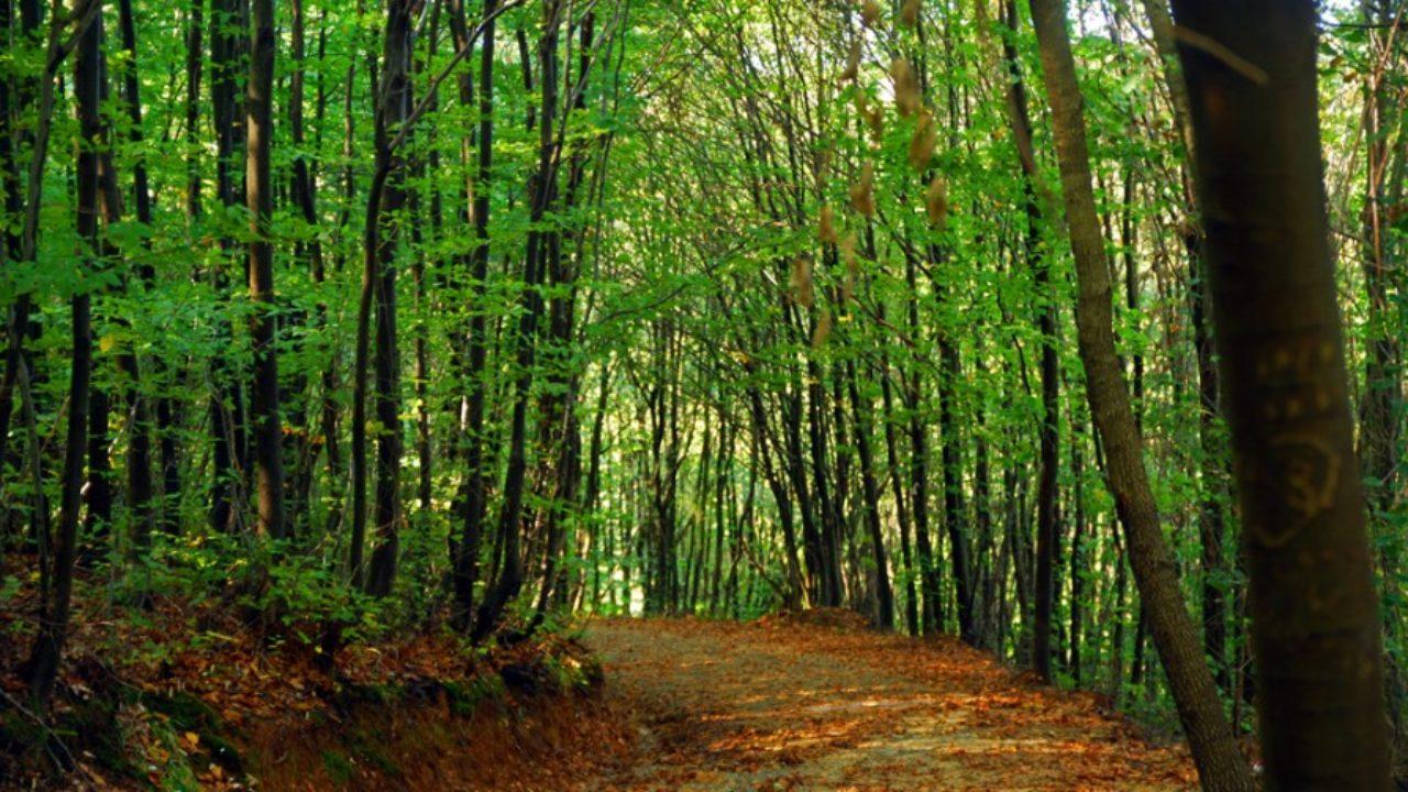 İETT'den doğa yürüyüşü severler için iki yeni hat