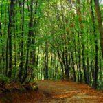 İETT doğa yürüyüşü