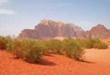 iklim değişikliği maki çöl
