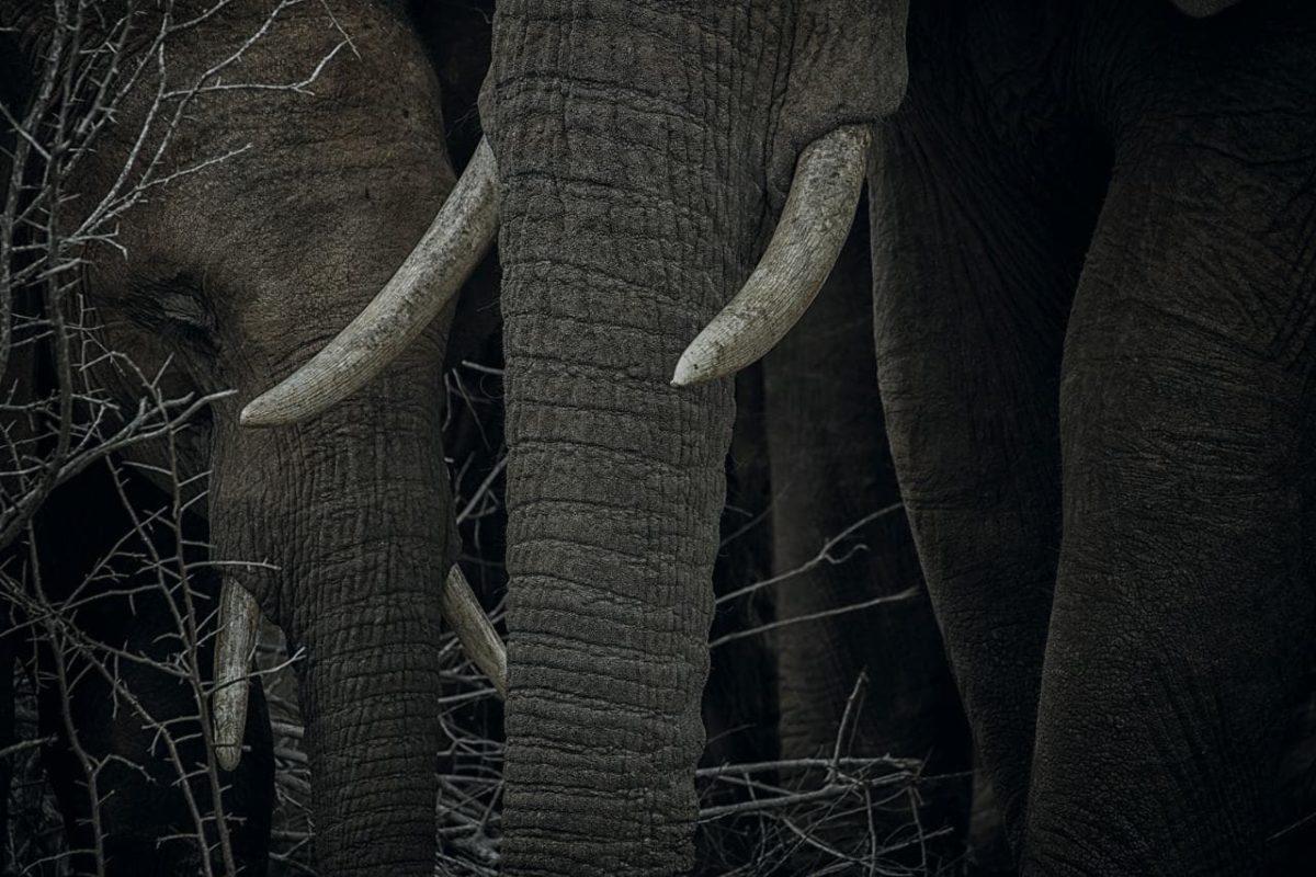 doğa fotoğrafı filler