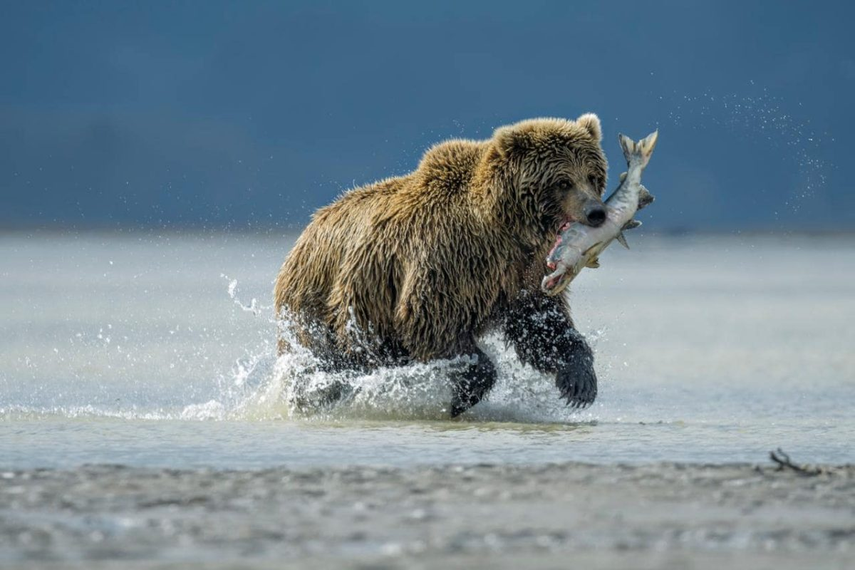 doğa fotoğrafı ayı