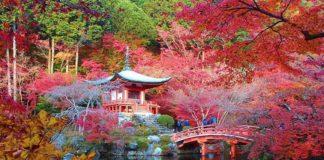 çiçek bahçesi kyoto