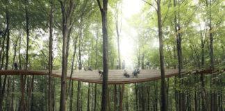 ormanda gezinti keyfi treetop experience