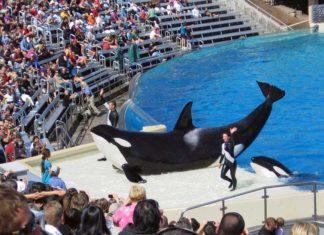 orka kat,i balina