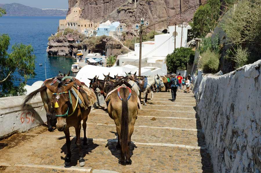 Santorini eşek