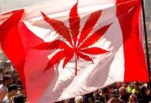 Kanada esrar içmek