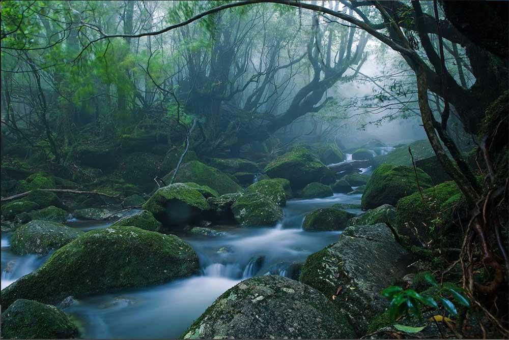 Japonya'nın en güzel ve huzurlu adaları