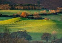 Exmoor Ulusal Park İngiltere