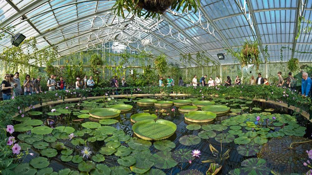 Kew Botanik Bahçesi