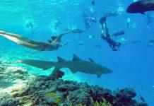 köpekbalığı maldivler